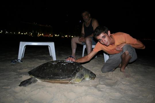 turtle on the beach in tel aviv beach